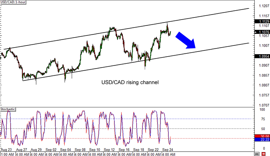 Forex usd to cad daily chart